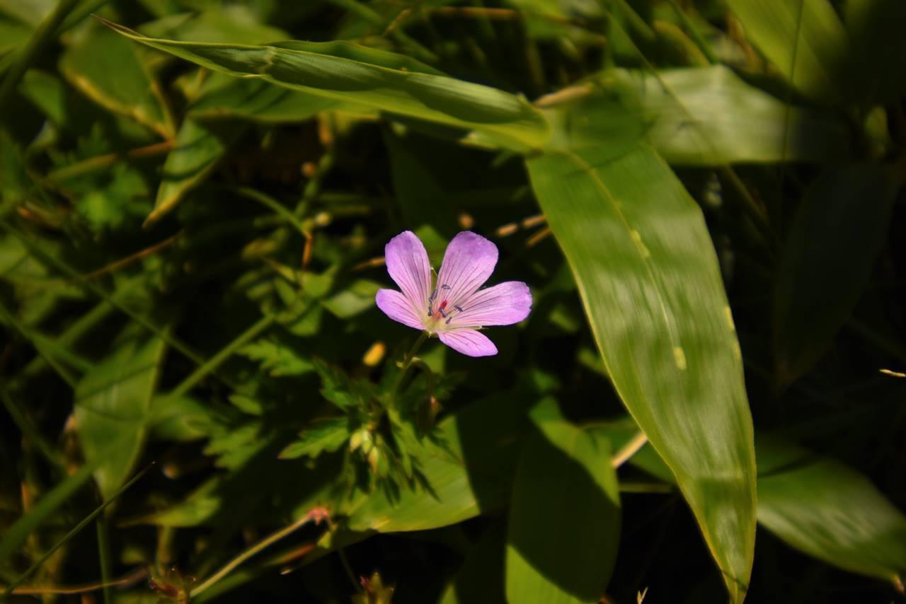 双子山に咲いていた花