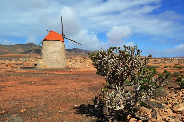 Tangerine scene, Fuerteventura, Canary Islands