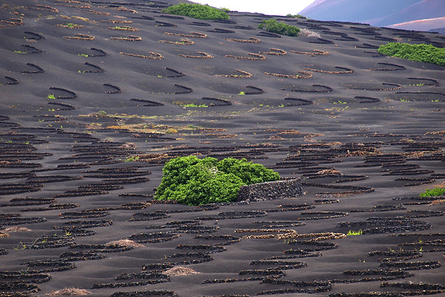 Volcanic vineyard, Canary Islands