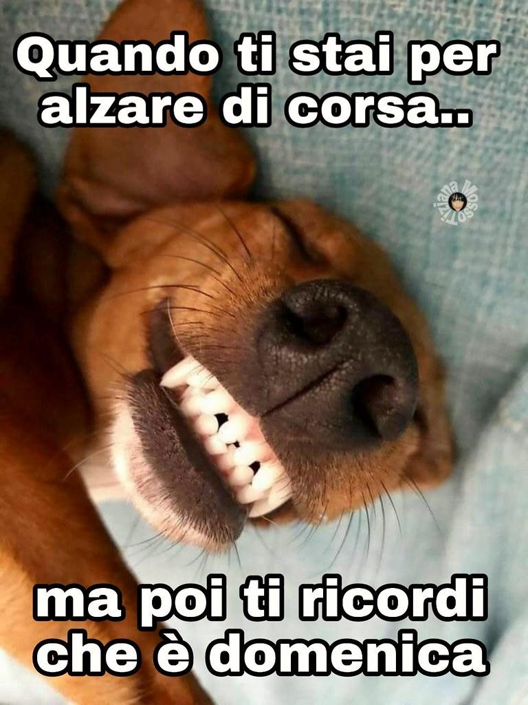 Immagini link divertenti buona domenica dog buongio for Immagini buongiorno divertentissime