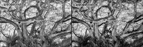 Aurora 2018 vs Aurora 2019 image comparison