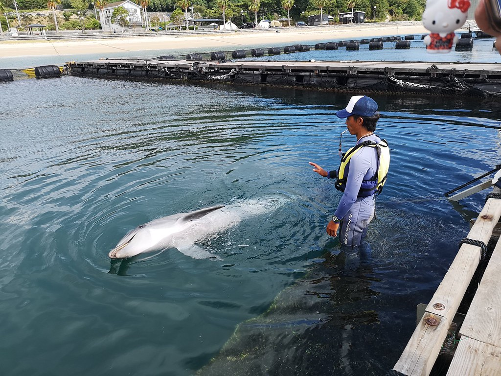 This dolphin is responding to commands from his trainer and performing tricks on cue.