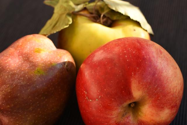 Süße Apfelpfannkuchen mit Honignüssen - Foto: Brigitte Stolle