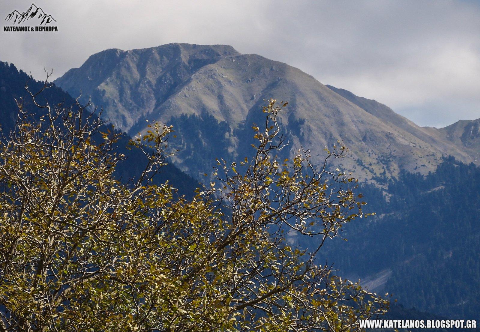 δέντρο καρυδιά ορεινό κατελάνος παναιτωλικό