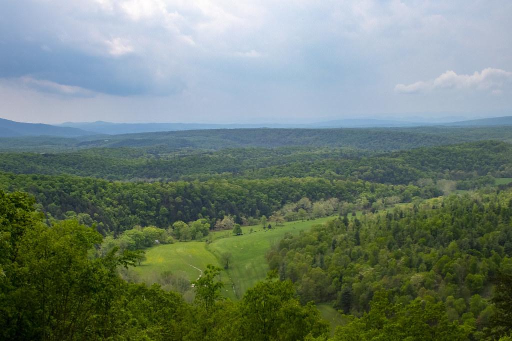 Photo of a forest by Jennifer Johnson