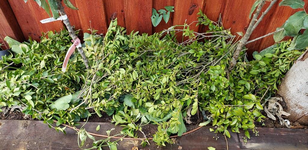My ramblings on compost. 30304983707_2f706de8ec_b