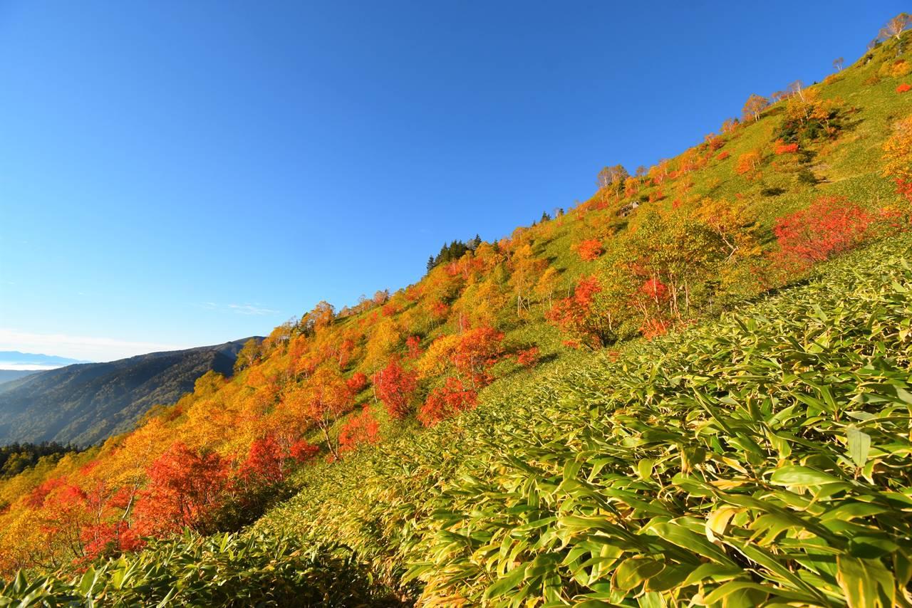 焼岳 笹と紅葉
