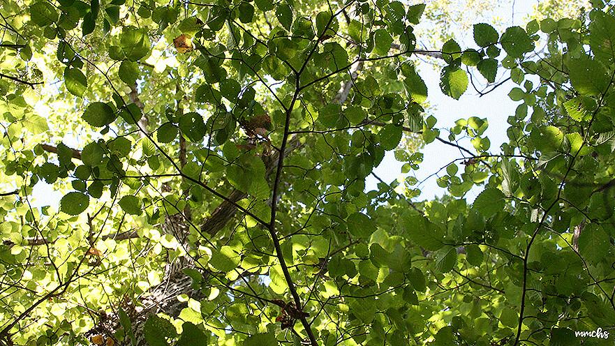 vegetación de la ruta de Calduch