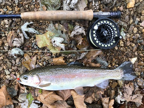 Photo of Rainbow trout with fly rod.