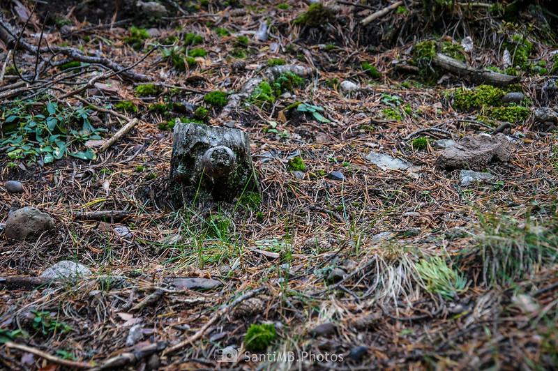 Un tronco con cara de oso