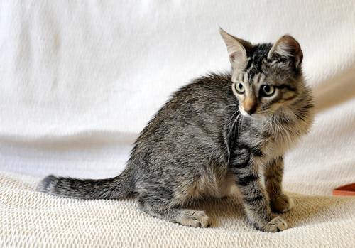 Free, gatita parda guapa y mimosa, muy buena, nacida en Julio´18, en adopción. Valencia. ADOPTADA. 45139179062_d9f720685a
