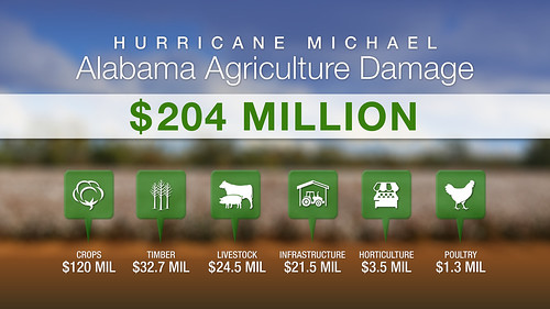 Hurricane Michael caused almost $204 million in agricultural damage