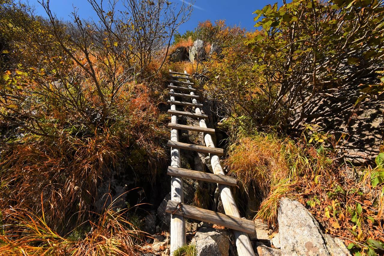 濃ヶ池~駒飼ノ池 登山道のハシゴ