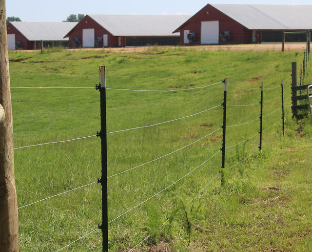 Cross fencing on the Anglins' farm
