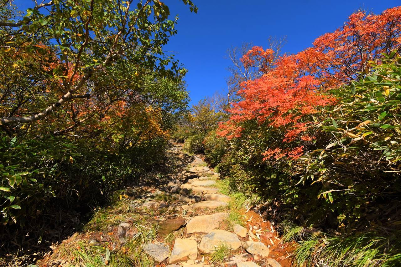 御嶽山登山道の紅葉
