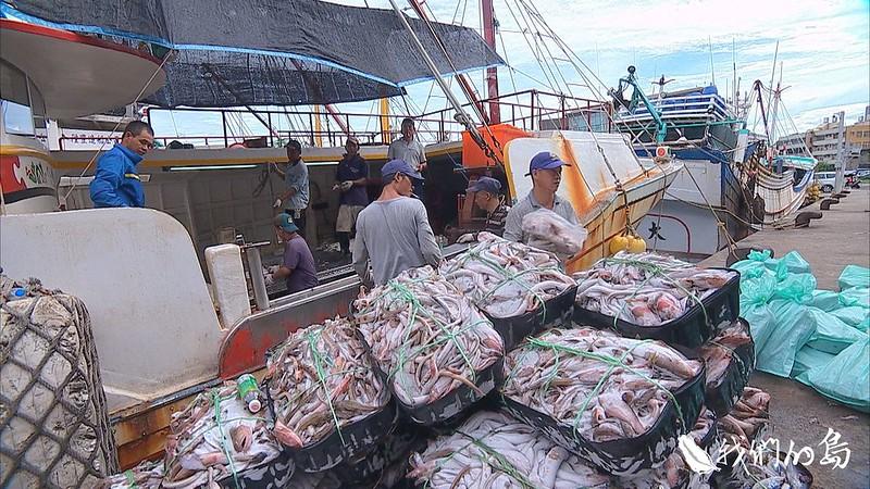 973-1- (5)這裡的漁獲只有四成賣到市場或海產店,六成以上都只能賣給加工廠商,做成魚粉或養殖飼料。