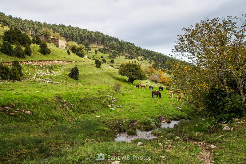 Caballos pastando junto a Cabanelles