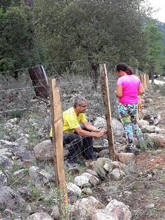 Agrafage de la clôture aux fils de fer