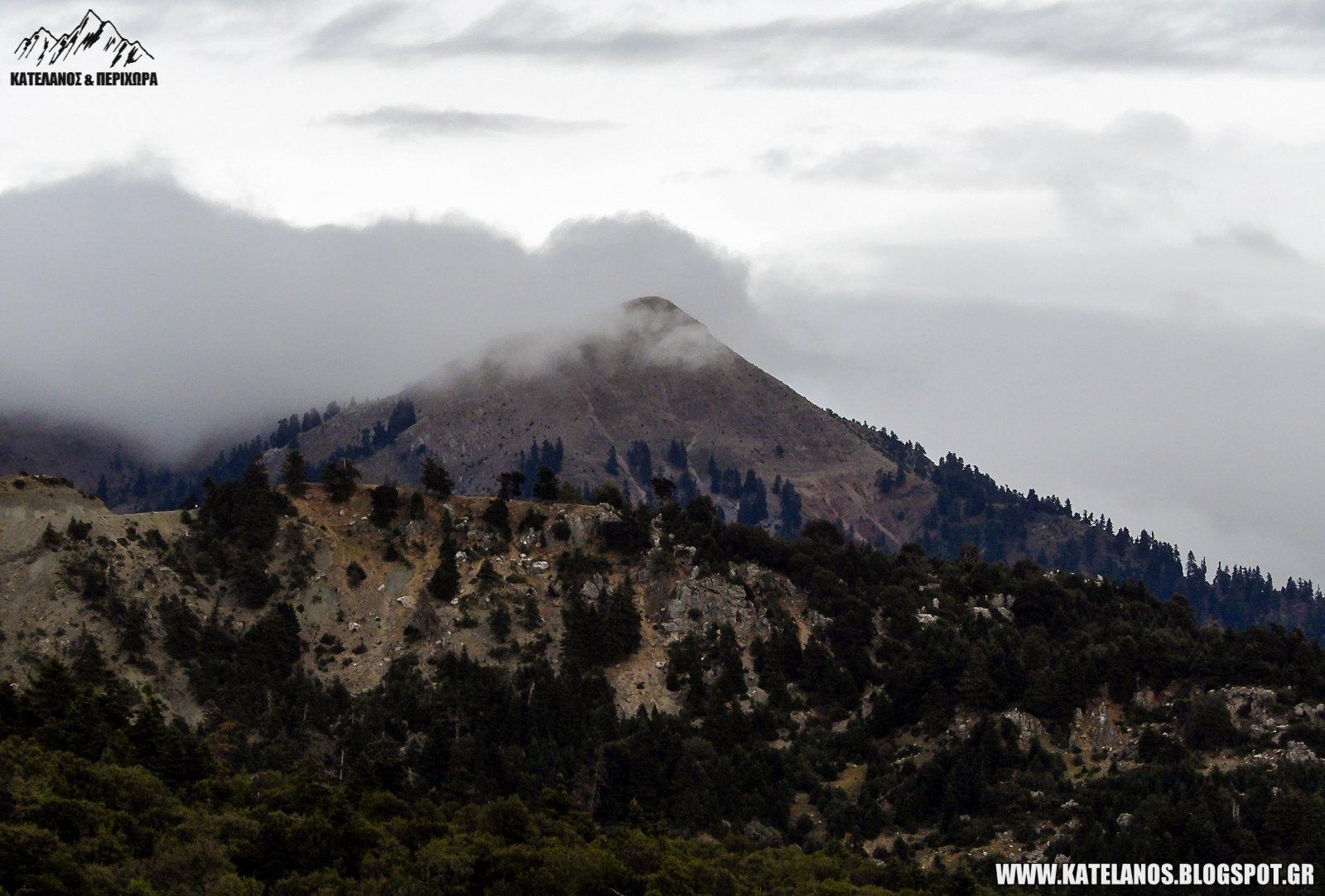 βουνοκορφές παναιτωλικού όρους κέδρος