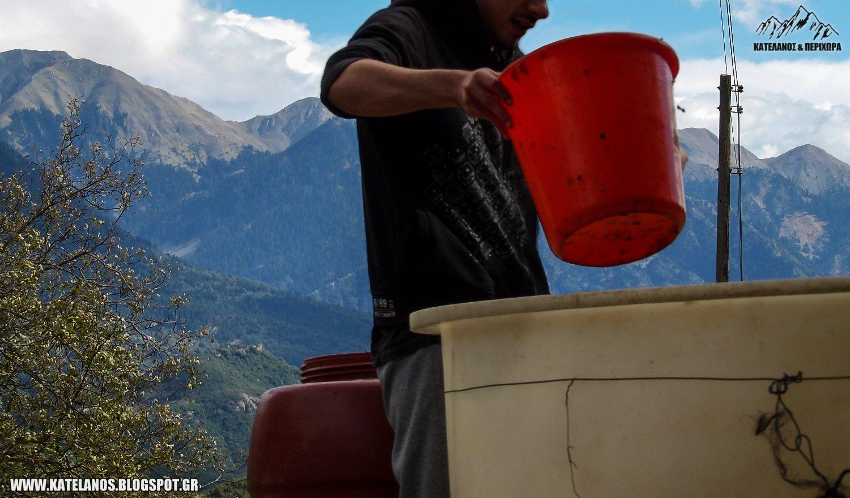 μουστος σοδειά ορεινη τριχωνιδα παρακαμπύλια