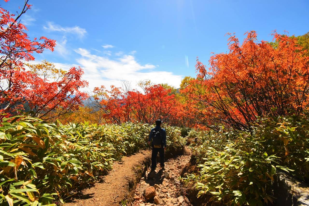 焼岳登山道の紅葉