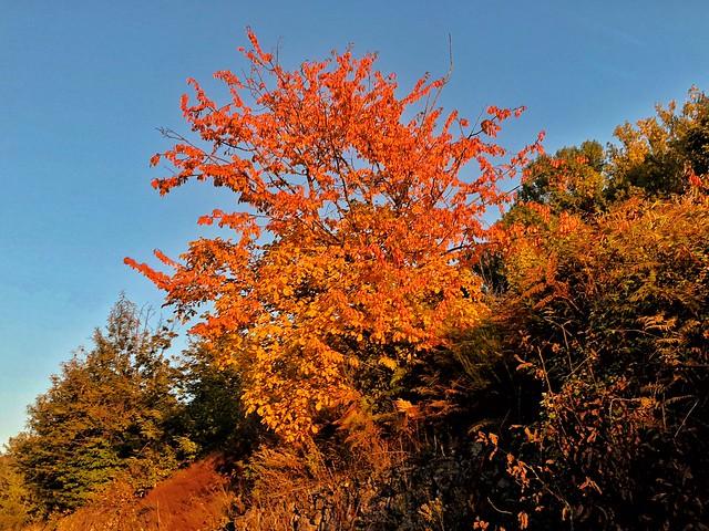 Los colores del otoño en el Valle del Ambroz (Cáceres)