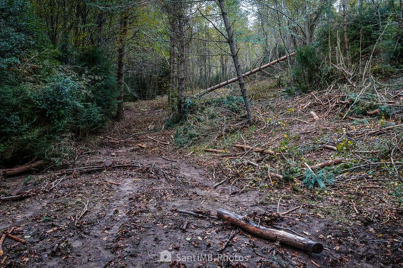 Trabajos forestales en la Baga de Clarent