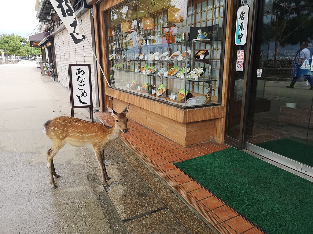 This free-roaming deer waits wistfully outside a restaurant.