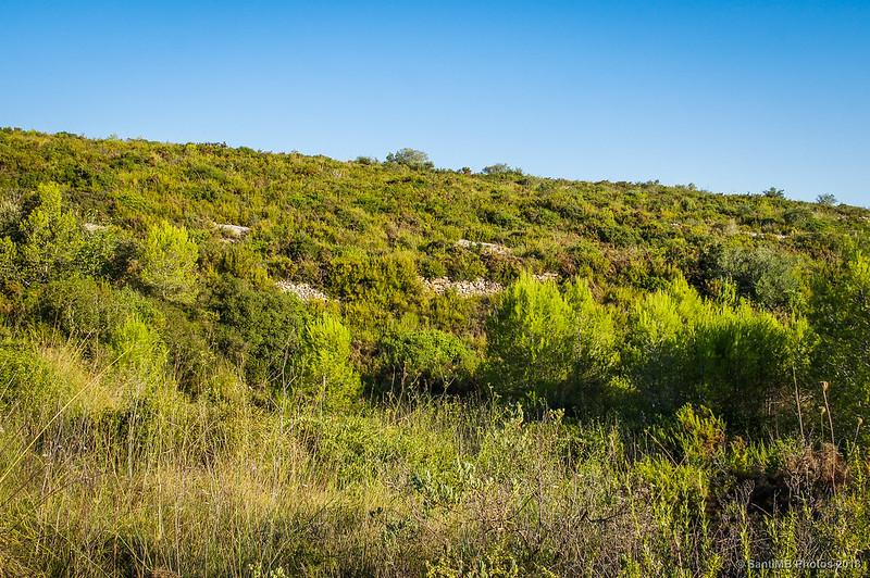 Bancales de viñedos abandonados en el Barranc de les Fontanilles