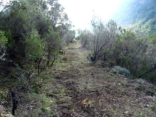 Le Chemin de Paliri après les travaux