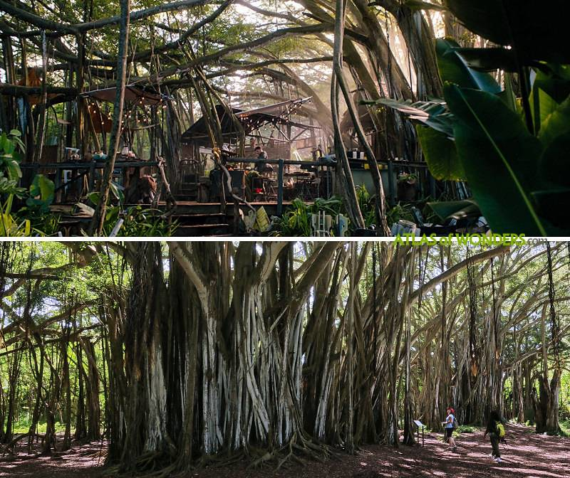 Jumanji location