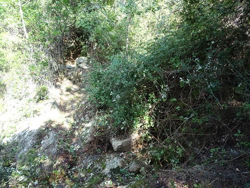 Chemin de Paliri historique : arrivée au 1er ruisseau avec le roncier traversé