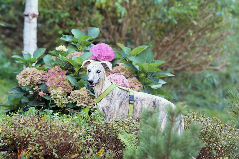 Balu im Steingarten (leider war das Licht schon schlecht um zu fotografieren)