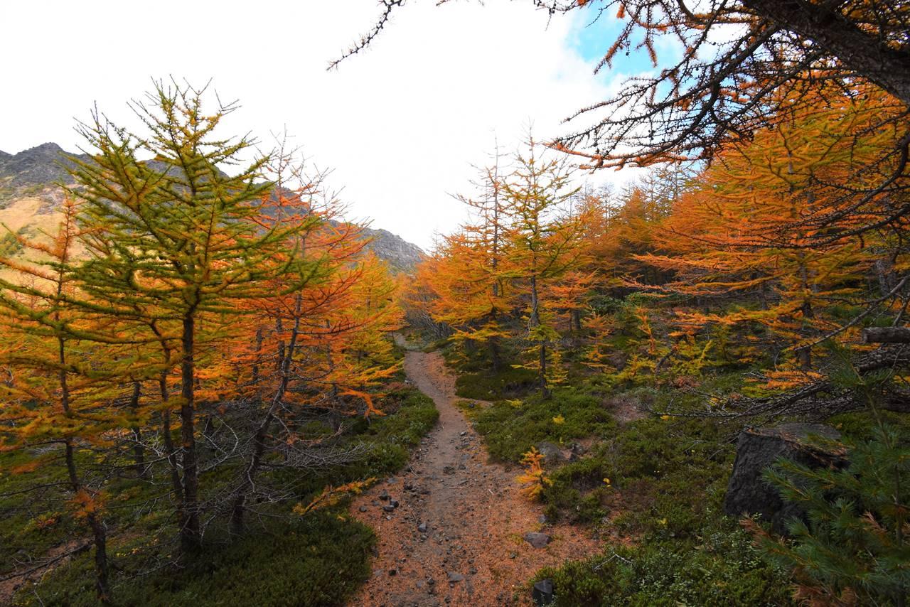 浅間山 登山道の紅葉