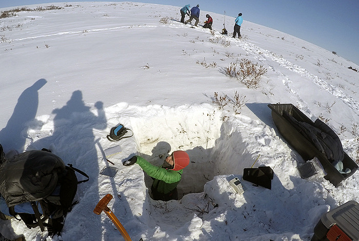 NGEE-Arctic researchers from Los Alamos, University of Alaska Fairbanks and Oak Ridge National Laboratory dig deep snow pits in tall shrub patches to understand the warming effect of snow-shrub interactions on underlying permafrost.