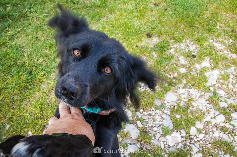 Perro en el refugio de Sant Romà de la Clusa