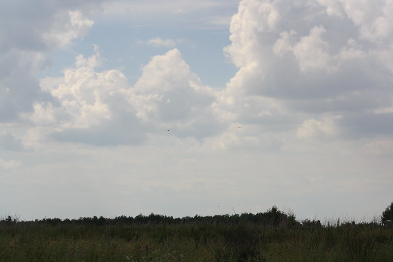 Птицы на фоне облака