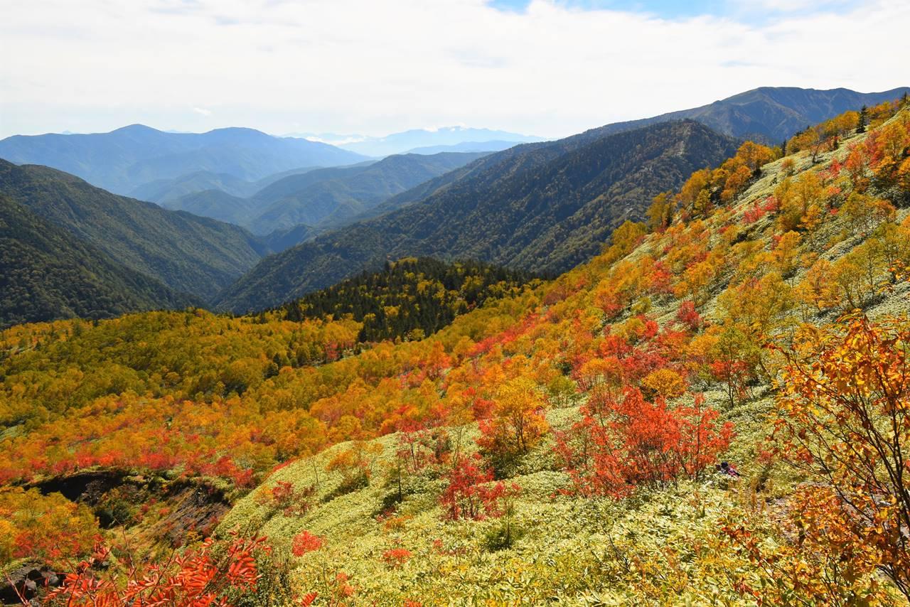 焼岳 カラマツの紅葉