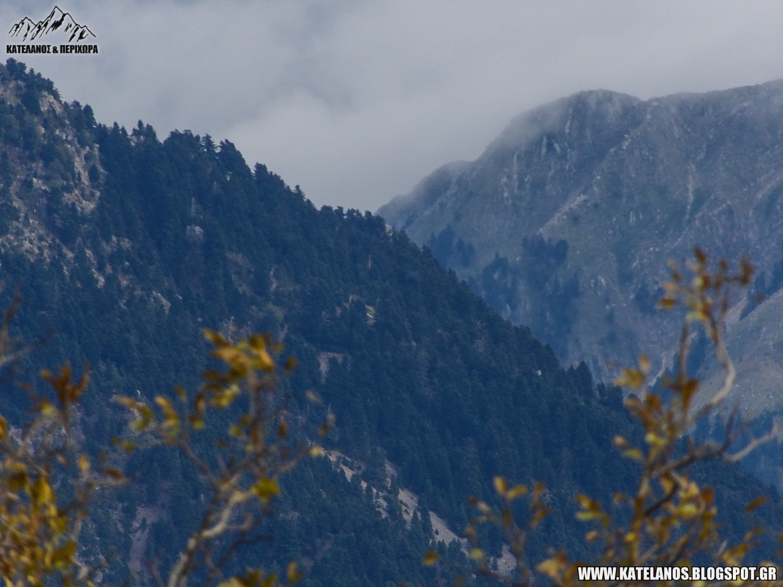 βουνοκορφές ελατόδασος