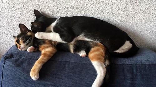 Martín, gatito blanquinegro guapísimo y súper listo nacido en Julio´18, en adopción. Valencia. ADOPTADO. 30665640637_9a2590cbbf