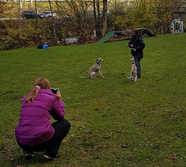 Unsere Trickdogs