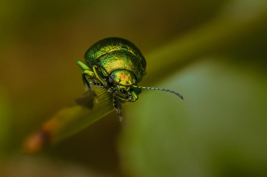 """20.- """"Mr. Beetle"""" - anikuni"""