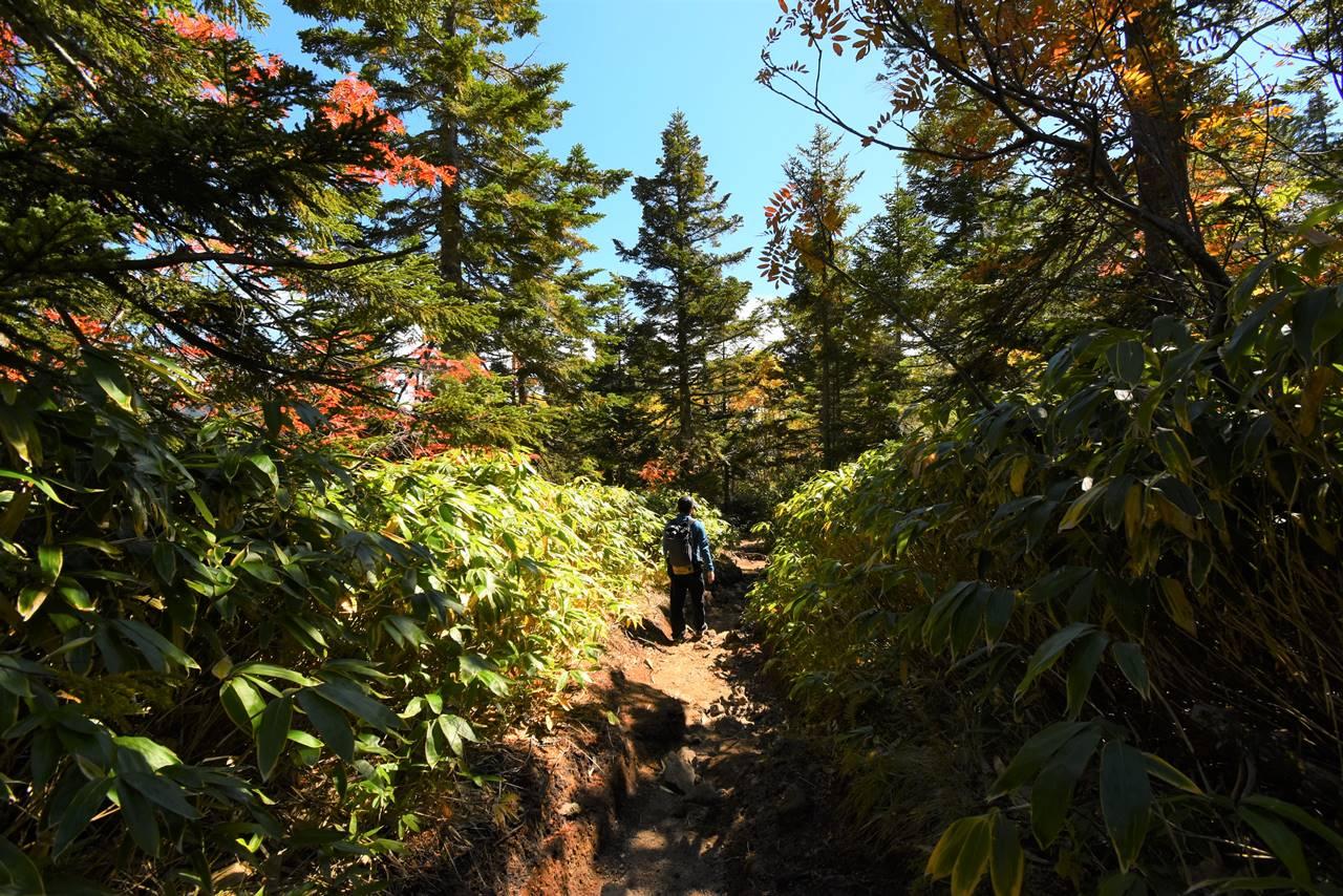 焼岳 新中の湯ルートの樹林帯