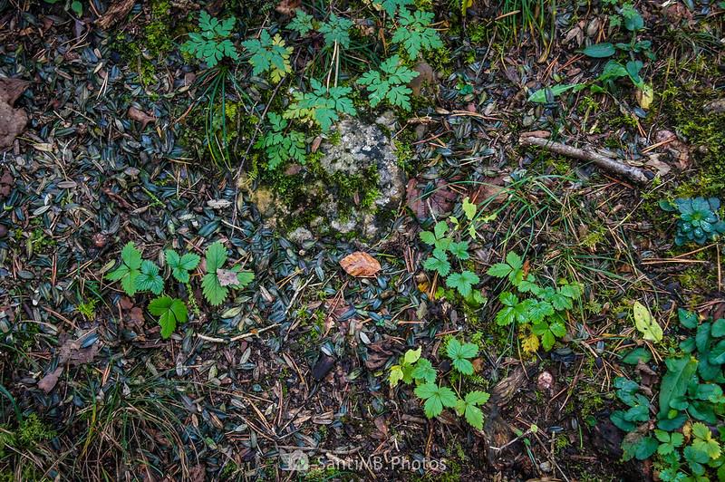 Fresa salvaje en la Serra del Catllaràs