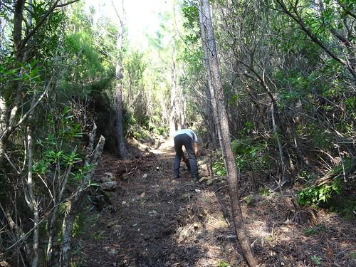 Chemin de Paliri historique : retour sur la partie démaquisée et nettoyée après le spuntinu