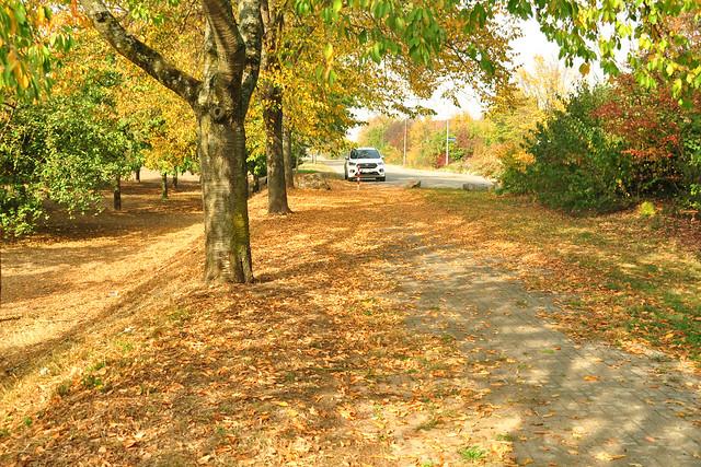 Aserdamm Neckarhausen ... Biotop, Streuobstwiese, Biotop, Bienen, Bienenvölker, Weißdorn, Honignüsse - Bienenküsse ... Foto: Brigitte Stolle, Oktober 2018