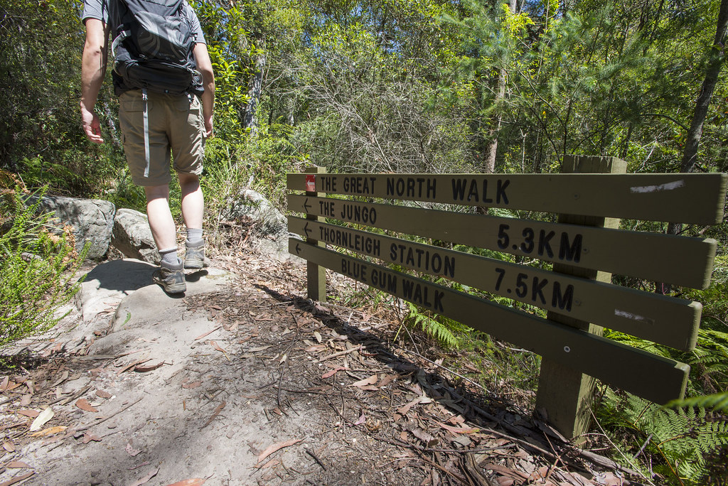Continue on Blue gum walk path