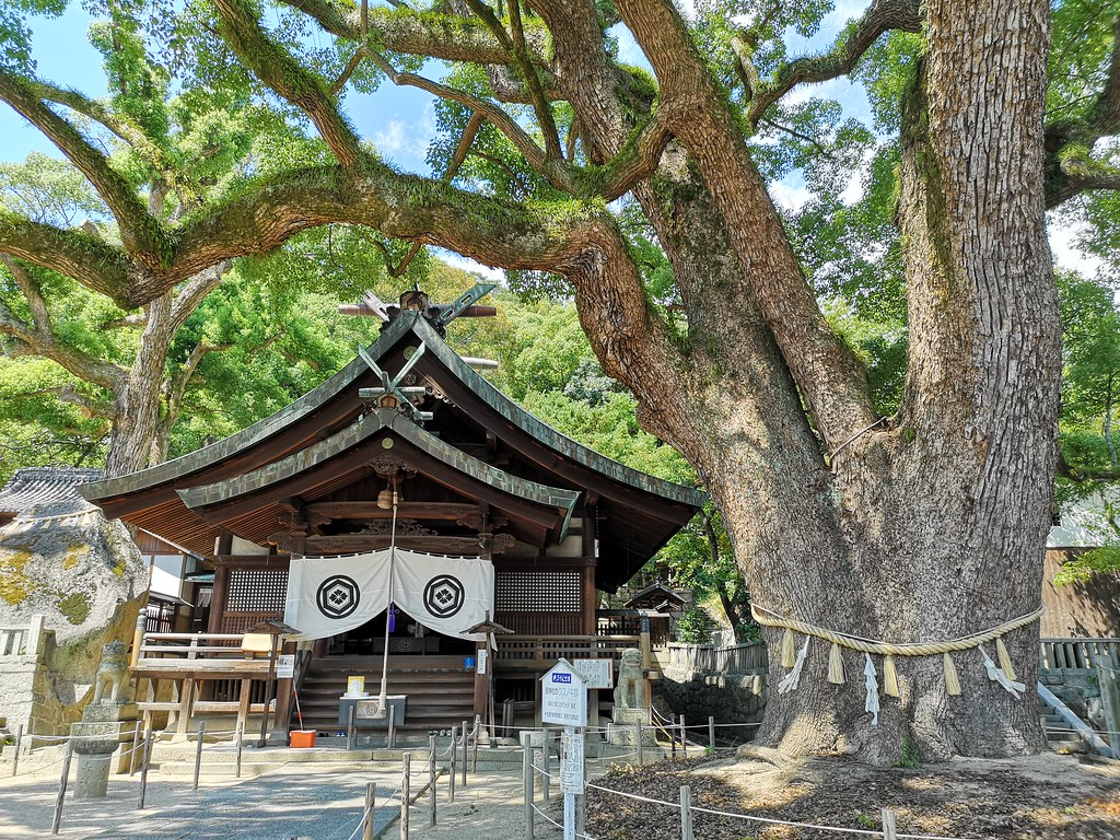 A gigantic camphor tree several hundreds of years old stands sentinel at this shrine at the foot of Mt Senkoji.