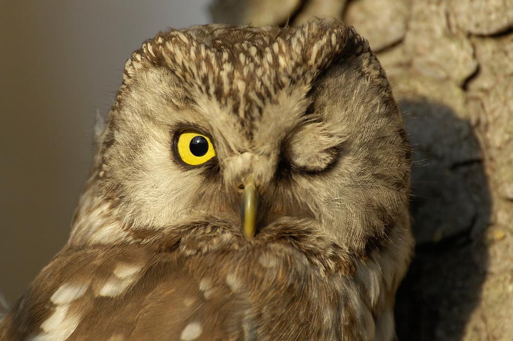 圖片來源:Staffan Widstrand / WWF