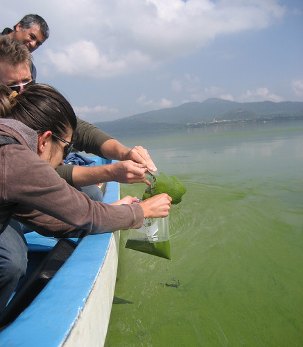 Researchers in a boat take a sample of algae